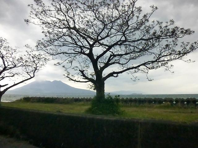 目の前に桜島が見えます。